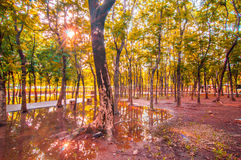 Tree i natur Royaltyfri Bild