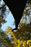 Tree i parkera arkivfoto