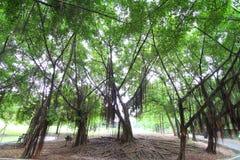 Tree i parkera Arkivbild