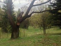 Tree i parkera Arkivfoton