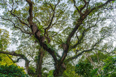 Tree i parkera royaltyfri foto