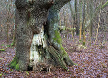 Tree i parkera fotografering för bildbyråer