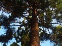 Tree i parkera royaltyfria foton