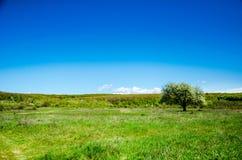 Tree i sätta in Bilder av sommarlandskapet Royaltyfria Bilder