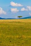 Tree i savannahen, typisk afrikansk liggande fotografering för bildbyråer