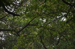Tree i skog royaltyfria bilder