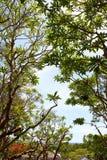 Tree i skogen Royaltyfri Bild
