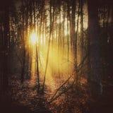 Tree i skogen Arkivfoto