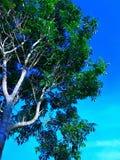 Tree i skyen royaltyfri fotografi