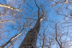 Tree i skyen Arkivfoto