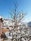 Tree i snow arkivfoto