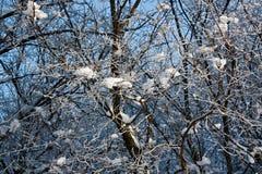 Tree i snow 2 Arkivfoton