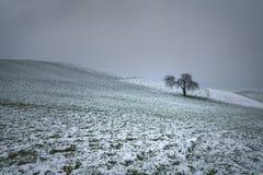 Tree i snow Fotografering för Bildbyråer