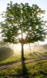 Tree i sunen Fotografering för Bildbyråer