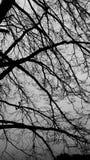 Tree i vinter arkivfoto