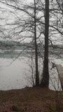 Tree i vinter fotografering för bildbyråer