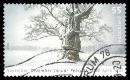 Tree i vinter Royaltyfria Foton