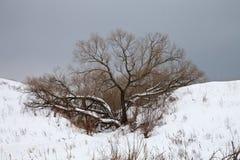 Tree i vinter Royaltyfri Foto
