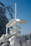 Tree i vinter Arkivbilder