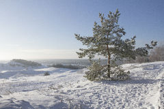 Tree i vinter Arkivfoton