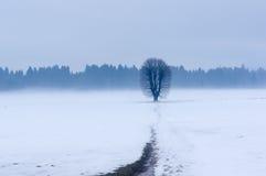 Tree i vinter Royaltyfri Fotografi