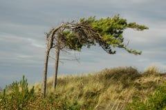 Tree i winden royaltyfria bilder