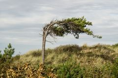 Tree i winden arkivfoton