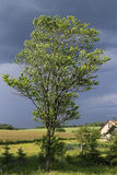 Tree i winden Royaltyfri Fotografi