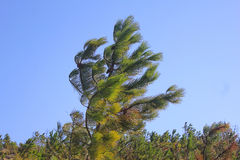 Tree i winden Arkivfoto