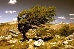 Tree i winden Royaltyfri Foto