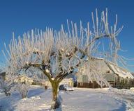 Tree of Ice Stock Photography