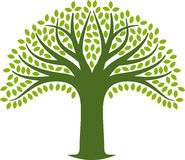 Tree icon Stock Photos