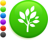 Tree icon on round internet button Royalty Free Stock Photo