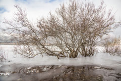 Tree in an icy lake in winter Stock Images