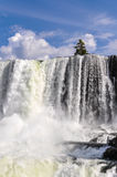 Tree at Iguazu Falls, Argentina Royalty Free Stock Photography