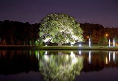 Tree illumination Royalty Free Stock Images