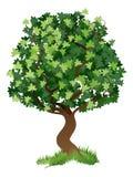 Tree illustration royalty free illustration