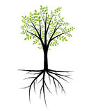 Tree illustration Stock Image
