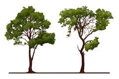 Tree Illustration Royalty Free Stock Photos