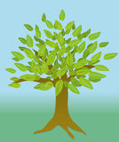 Tree. An illustration of a tree with leaves Stock Photos