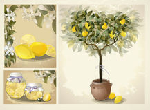 Tree illustration with lemon fruits. Royalty Free Stock Images