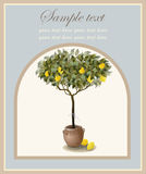 Tree illustration with lemon fruits. Royalty Free Stock Photos