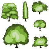 Tree illustration vector Stock Photography