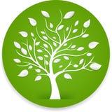 Tree. Illustration of tree  on white background Royalty Free Stock Photos