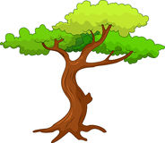 Tree illustration for you design Royalty Free Stock Photos