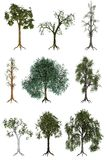 Tree illustrations Royalty Free Stock Photo