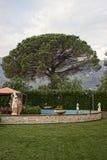 The tree Stock Image