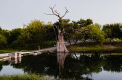 Tree impacted by lightning, tree burned and dried on a beautiful river royalty free stock photography