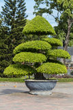 Tree in Imperial Royal Palace of Nguyen dynasty in  Hue Royalty Free Stock Photo