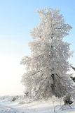 Tree In A Snow In The Winter Afternoon Stock Photography